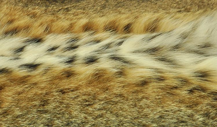 Шубы из рыси